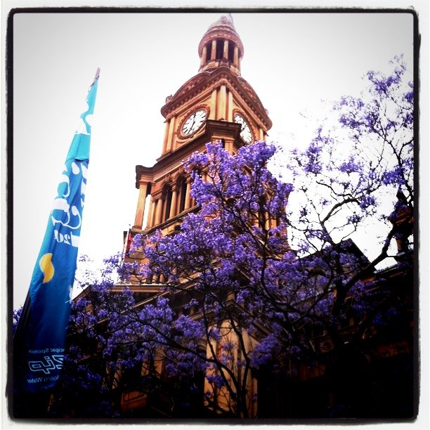 Sydney - Purple Flowers