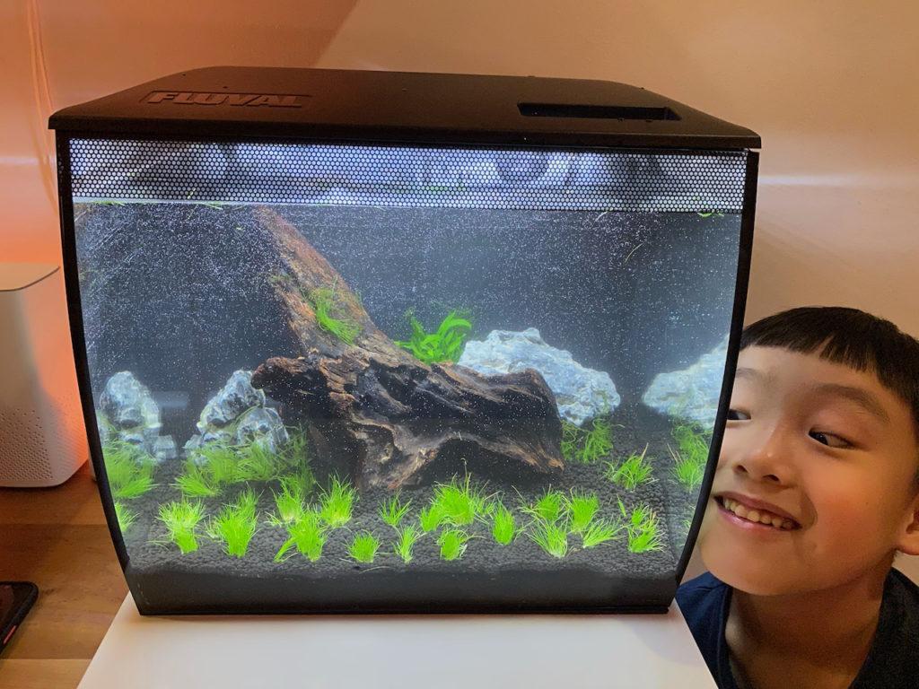 Day 1: Fish Tank