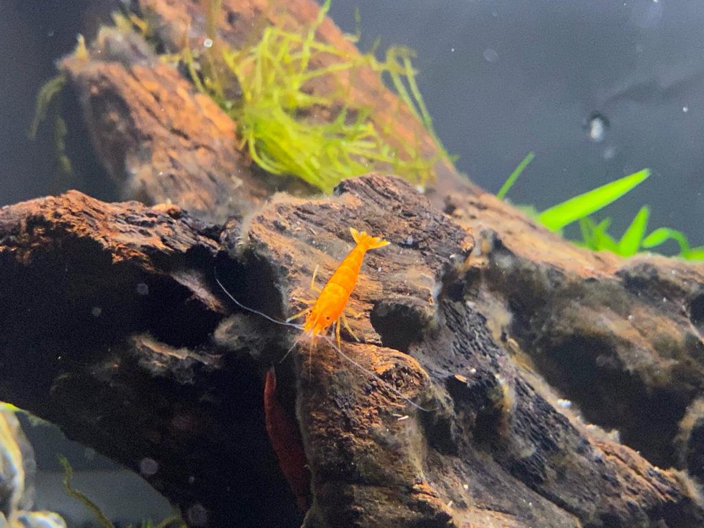 Orange Pumpkin Shrimp